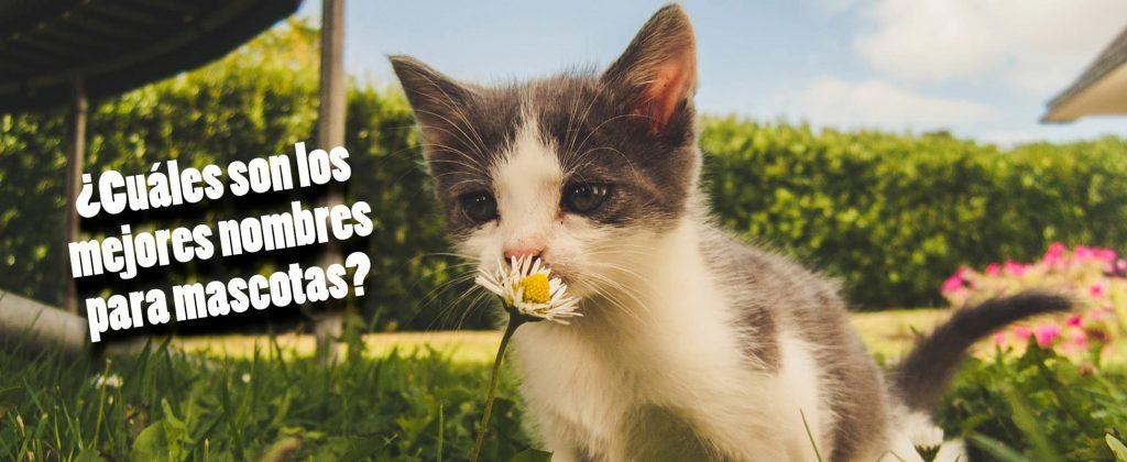 Cuáles son los mejores nombres para mascotas